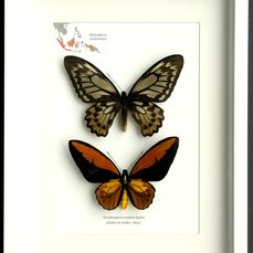 Check out our Natural history auction