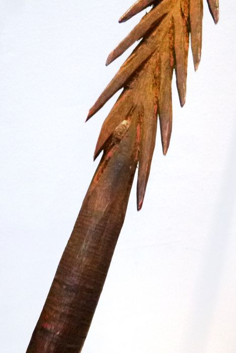 Old Barbed Wooden Hunting Fishing Spear Head Aboriginal