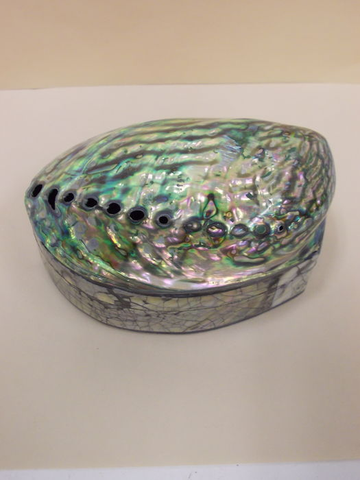 Jewelry Box New Zealand Abalone shell jewellery box new zealand