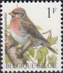 Check out our Belgium 1992 - Buzin - OBP 2457 with curiosity