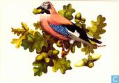 Vogels: Vlaamse Gaai
