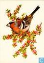 Postcards - Opbouw, De (Utrecht) - Vogels: Vink