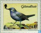Timbres-poste - Gibraltar - Oiseaux