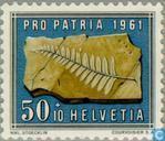 Edelstenen en fossielen