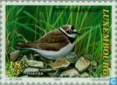 Timbres-poste - Luxembourg - Oiseaux