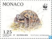 Postage Stamps - Monaco - WWF-tortoise