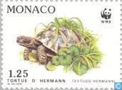 WWF-tortue