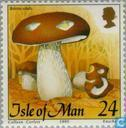 Postage Stamps - Man - Mushrooms