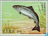 Briefmarken - Irland - Sea Creatures