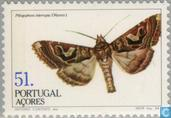 Postage Stamps - Azores - Insects