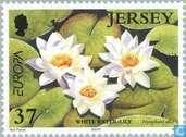 Postzegels - Jersey - Europa – Water, natuurlijke rijkdom