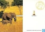 B004627 - WWF