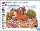 WWF-The Cyprus Mouflon