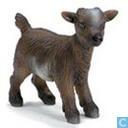 chèvre naine bébé