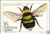 Briefmarken - Azoren - Insekten
