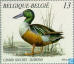 Briefmarken - Belgien [BEL] - Enten