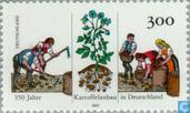 Kartoffelanbau 1647-1997