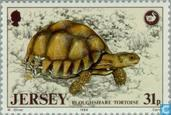Postage Stamps - Jersey - Animals