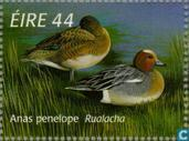 Postage Stamps - Ireland - Ducks