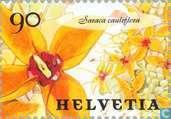 Timbres-poste - Suisse [CHE] - Fleurs
