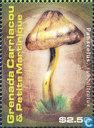 Champignons des Caraïbes