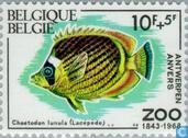Zoo Anvers IV poissons