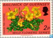 Postage Stamps - Guernsey - Wildflowers
