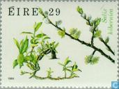 Postzegels - Ierland - Flora