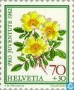 Postage Stamps - Switzerland [CHE] - Flowers-Roses
