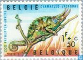 Reptilesn