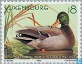 Timbres-poste - Luxembourg - Canards