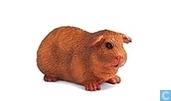 porcs Guinée