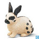 Schwarz-weißes Kaninchen