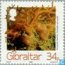 Timbres-poste - Gibraltar - Créatures de la mer