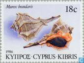 Postage Stamps - Cyprus [CYP] - shells