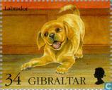 Timbres-poste - Gibraltar - Chiens