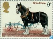 Postage Stamps - Great Britain [GBR] - Horses