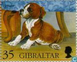 Postage Stamps - Gibraltar - Dogs