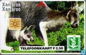 Bedreigde Dierenwereld Kangoeroe