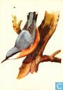 Ansichtkaarten - Opbouw, De (Utrecht) - Vogels: Boomklever