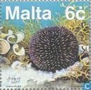 Mediterranean flora