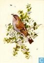 Postcards - Opbouw, De (Utrecht) - Vogels: Heggemus