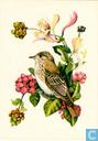 Ansichtkaarten - Opbouw, De (Utrecht) - Vogels: Grauwe Vliegenvanger