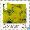 Postage Stamps - Gibraltar - Sea Creatures