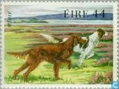 Postage Stamps - Ireland - Dogs