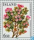Briefmarken - Island - Blumen