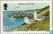 Les oiseaux de mer