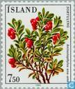 Postage Stamps - Iceland - Flowers