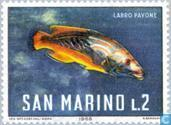 Postage Stamps - San Marino - Sea Creatures