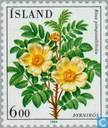 Timbres-poste - Islande - Fleurs
